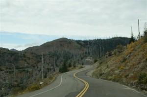 33 jaar na de uitbarsting groeit er weer van alles