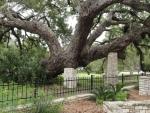 De oak is wel erg zwaar