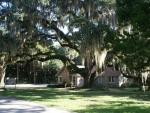 Oaks in het Washington Oaks Gardens State Park. Overal zie je deze eeuwen oude, overweldigende grote bomen. Vol met Spanish Moss en sommigen met een overspanning van 30 meter breed