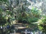 Florida; geen gebrek aan water. Van tijd tot tijd een goede regenbui. Mooi groen.