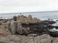 Montery coast