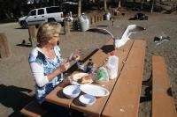 lunch delen met de meeuwen